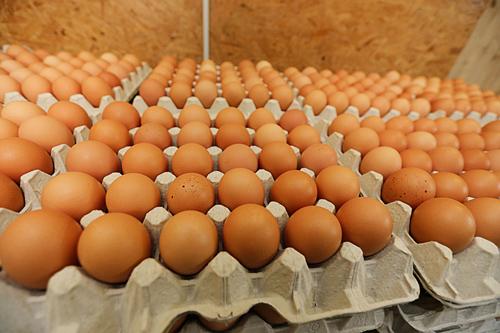 Eier-im-Eierkarton