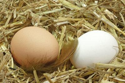 Hühnereier im Nest