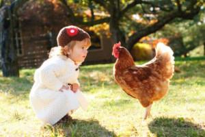 Huhn im Sonnenlicht
