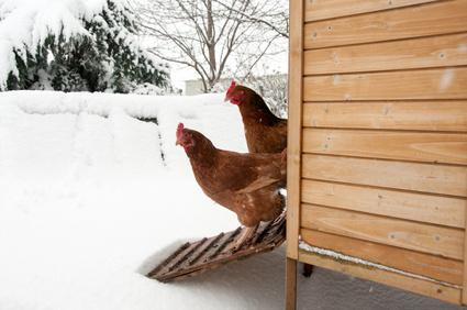 Hühnerhaltung Winter