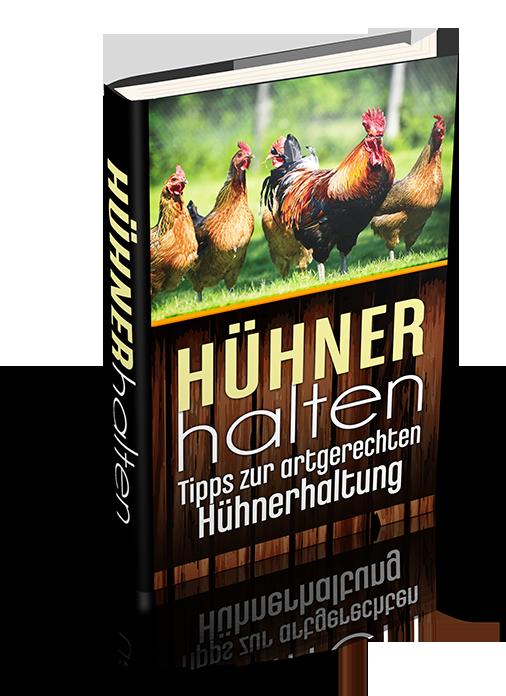 Tipps zur Hühnerhaltung